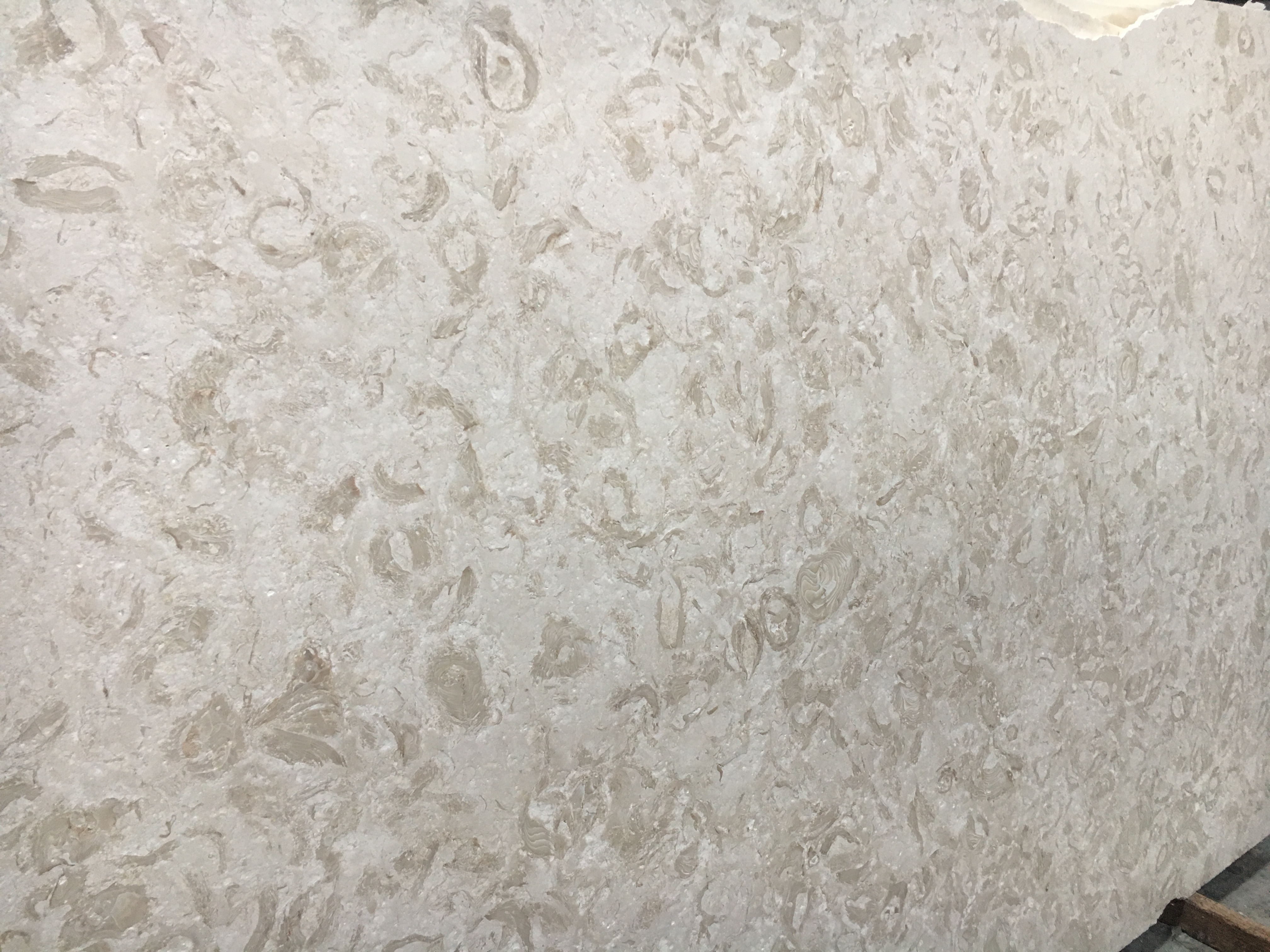 """Product Name: SHELLS REEF BEIGE LEATHER FF 3CMLot #: MED1755 Avg. size: 103"""" X 63.75"""""""